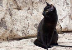 Giovane gatto nero Immagine Stock
