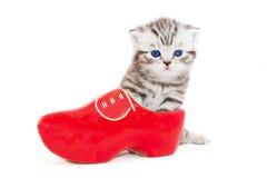 Giovane gatto in scarpa rossa Fotografia Stock