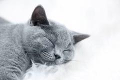 Giovane gatto sveglio che riposa sulla pelliccia bianca fotografia stock libera da diritti