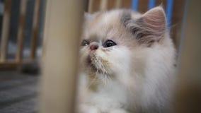 Giovane gatto sveglio in gabbia di legno stock footage