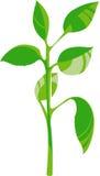 Giovane germoglio verde -   Fotografia Stock