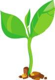 Giovane germoglio verde - vettore Fotografia Stock Libera da Diritti