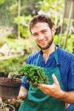 Giovane giardiniere con i bonsai Immagine Stock