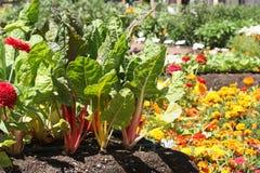 Giovane giardino immagini stock libere da diritti