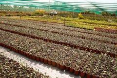 Giovane giardino Fotografie Stock