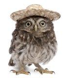 Giovane gufo che porta un cappello Fotografia Stock Libera da Diritti
