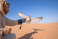 Giovane gufo reale maschio di faraone durante la manifestazione di caccia col falcone del deserto nel Dubai, UAE Fotografie Stock