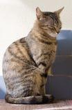 Giovane housecat femminile sveglio. Immagine Stock Libera da Diritti