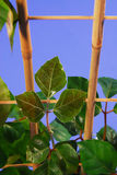 Giovane houseplant Immagini Stock Libere da Diritti