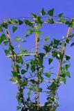 Giovane houseplant Fotografie Stock Libere da Diritti