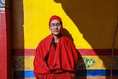 Giovane lama maschio con il monocolo che sta al sole al ancien immagine stock libera da diritti