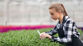 Giovane lavoratore agricolo femminile preoccupantesi che versa le piante organiche dal primo piano di medium del tubo di vetro archivi video