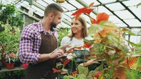 Giovane lavoro dei fioristi delle coppie nel Garden Center L'uomo e la donna attraenti in grembiule contano i fiori facendo uso d Immagini Stock
