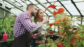 Giovane lavoro dei fioristi delle coppie nel Garden Center L'uomo e la donna attraenti in grembiule contano i fiori facendo uso d Fotografia Stock