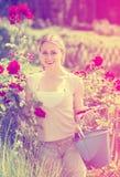Giovane lavoro femminile positivo con le rose del cespuglio con orticolo immagine stock