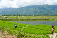 Giovane lavoro manuale nelle risaie filippine Immagine Stock