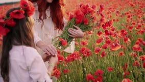 Giovane madre con poca figlia raccogliere i fiori rossi in un campo sbocciante, fine del papavero su, movimento lento stock footage