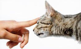 Giovane mano dell'essere umano del gatto del mixed-pane fotografia stock libera da diritti