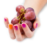 Giovane mano femminile con il ramo dell'uva rossa Fotografia Stock Libera da Diritti