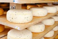 Giovane maturazione del formaggio Fotografie Stock
