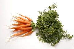 Giovane mazzo fresco di carote Immagine Stock