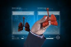 Giovane medico che mostra i polmoni Fotografia Stock
