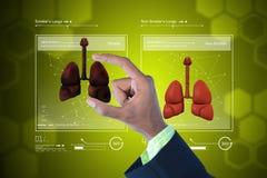 Giovane medico che mostra i polmoni Fotografia Stock Libera da Diritti