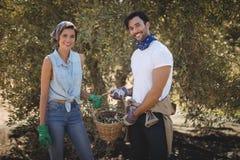 Giovane merce nel carrello sorridente delle olive della tenuta delle coppie all'azienda agricola Fotografie Stock