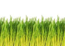 Giovane modello dell'erba verde - fondo bianco Fotografie Stock Libere da Diritti