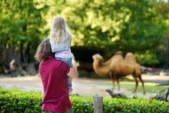 Giovane padre ed i suoi cammelli di sorveglianza della piccola figlia nello zoo il giorno di estate caldo e soleggiato Immagini Stock Libere da Diritti
