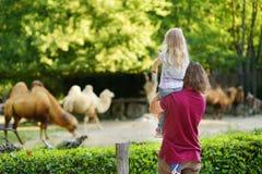 Giovane padre ed i suoi cammelli di sorveglianza della piccola figlia nello zoo il giorno di estate caldo e soleggiato Immagine Stock