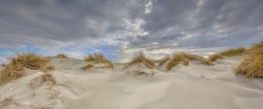 Giovane paesaggio costiero della duna fotografia stock
