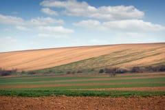Giovane paesaggio verde del giacimento di grano Immagini Stock Libere da Diritti