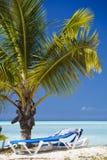 Giovane palma sulla spiaggia caraibica, Antigua Fotografia Stock Libera da Diritti
