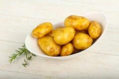 Giovane patata cruda fotografia stock libera da diritti