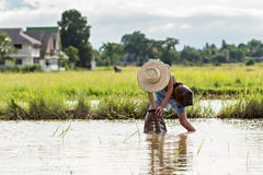 Giovane pesca dell'agricoltore nella palude Immagine Stock
