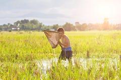 Giovane pesca dell'agricoltore nella palude Fotografia Stock