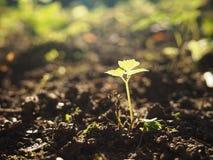 Giovane pianta crescente su un fondo soleggiato immagine stock libera da diritti