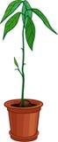 Giovane pianta dell'avocado che cresce dal pozzo Fotografie Stock Libere da Diritti