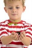 Giovane pianta della holding del ragazzo Fotografia Stock