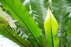 Giovane pianta fresca della giungla nell'ambito dei raggi di luce caldi in un nuovo e giardino a crescita rapida nella mia iarda  Fotografia Stock