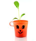 Giovane pianta verde isolata Immagini Stock Libere da Diritti