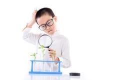 Giovane piantina asiatica della pianta del controllo del ragazzo in laboratorio Fotografie Stock