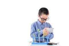 Giovane piantina asiatica della pianta del controllo del ragazzo in laboratorio Fotografia Stock Libera da Diritti