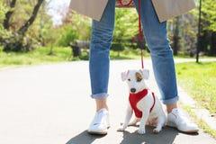 Giovane piccolo cane della razza con macchia marrone divertente sul fronte Ritratto dell'aria aperta canina della presa del terri fotografie stock libere da diritti