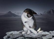 Giovane playin del gatto immagine stock libera da diritti