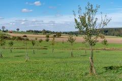 Giovane prato del frutteto davanti a cielo blu sull'autunno fotografia stock libera da diritti