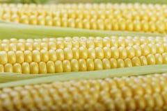 Giovane primo piano del cereale Fotografie Stock