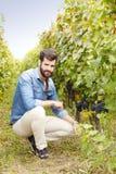 Giovane proprietario dei vineyars Immagine Stock