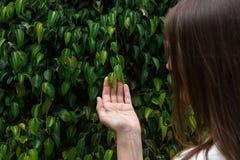 Giovane ragazza caucasica della donna con le foglie verdi commoventi dei capelli lunghi della castagna sul ramo di albero in Fore fotografia stock